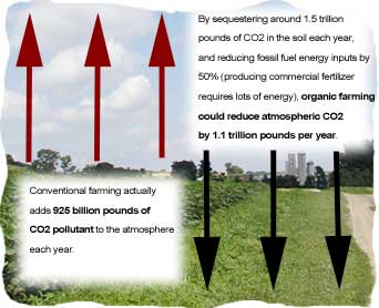 carbon sequestratioon image 1