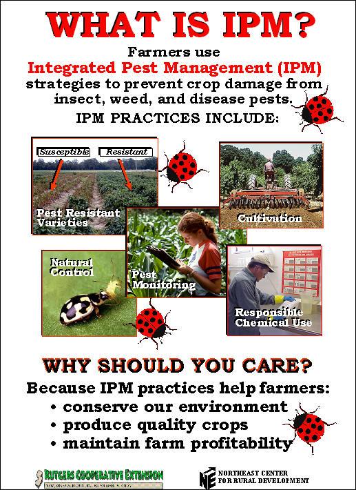 Pesticides O Ecotextiles