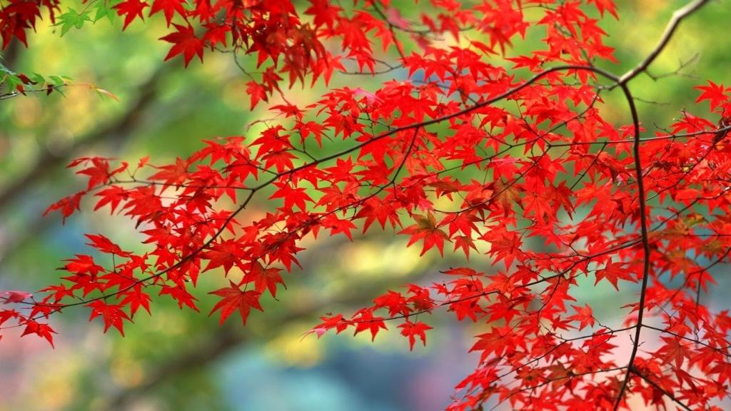 autumn-backgrounds-desktop