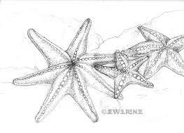 From Jewel  Renee Illustration; jewelrenee.blogspot.com/2011/06/starfish-7-legged-and-otherwise.html